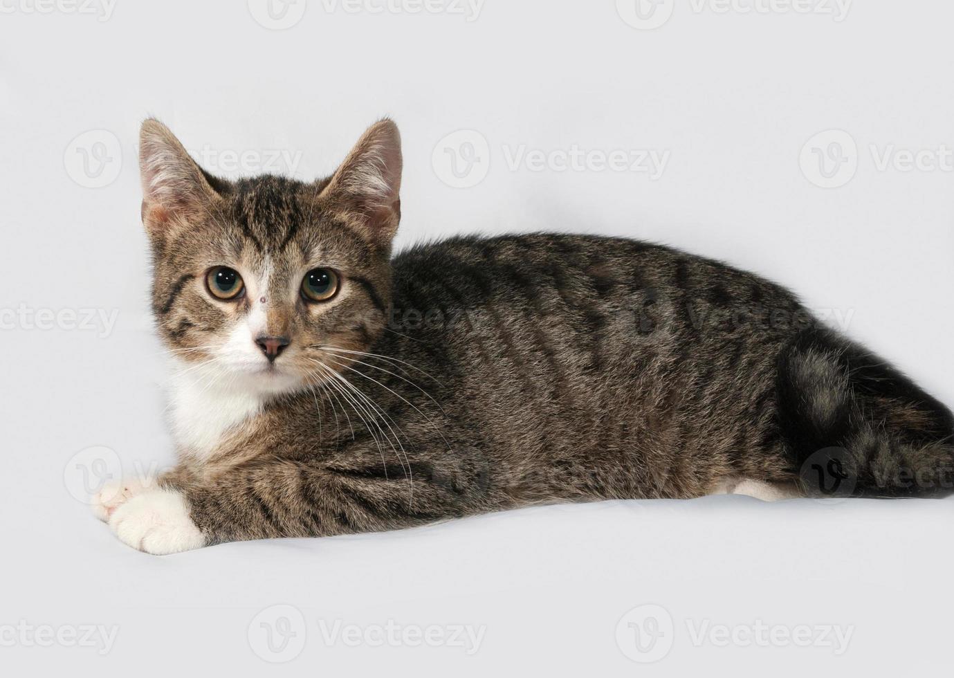 gatito rayado y blanco que miente en gris foto