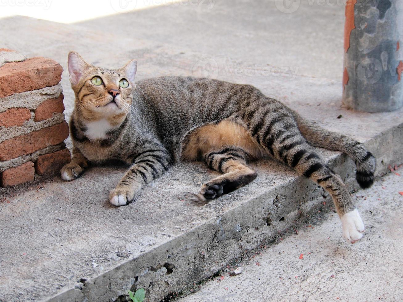 lindo gato atigrado se tumbó en el suelo foto