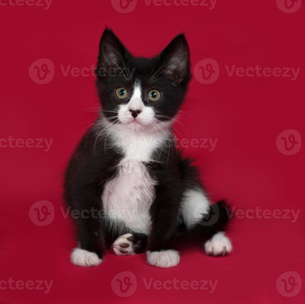Black and white kitten sitting on red photo