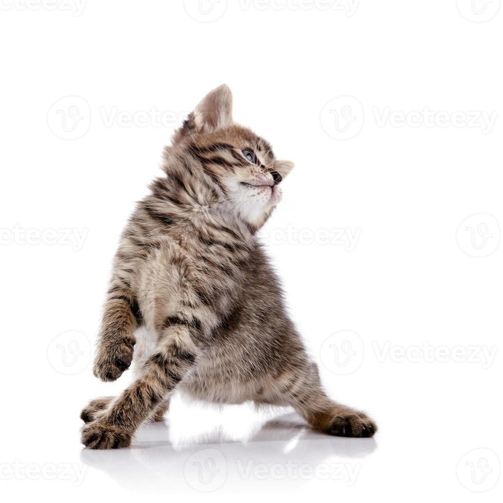 rayado gatito juguetón encantador. foto