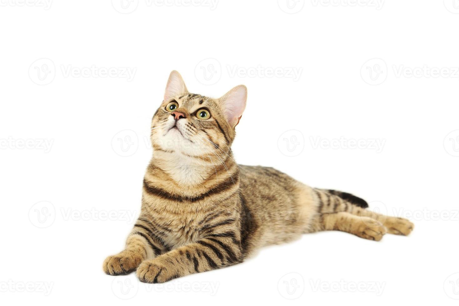 Beautiful cat isolated on white background photo