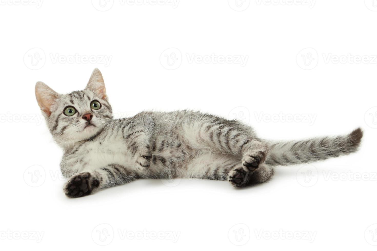 Beautiful cat isolated on white photo