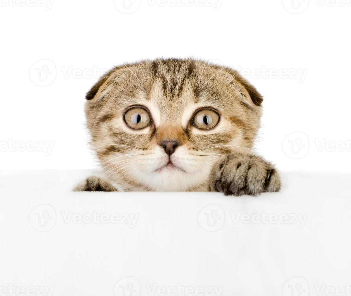 gatito asustado mirando por el cartel foto