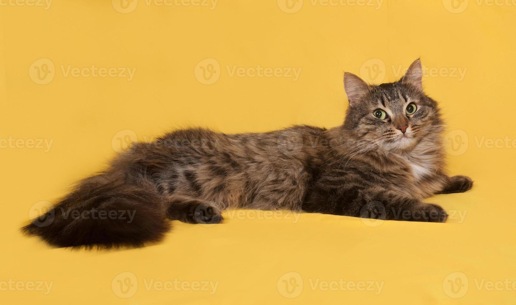 Fluffy tabby cat lies on yellow photo