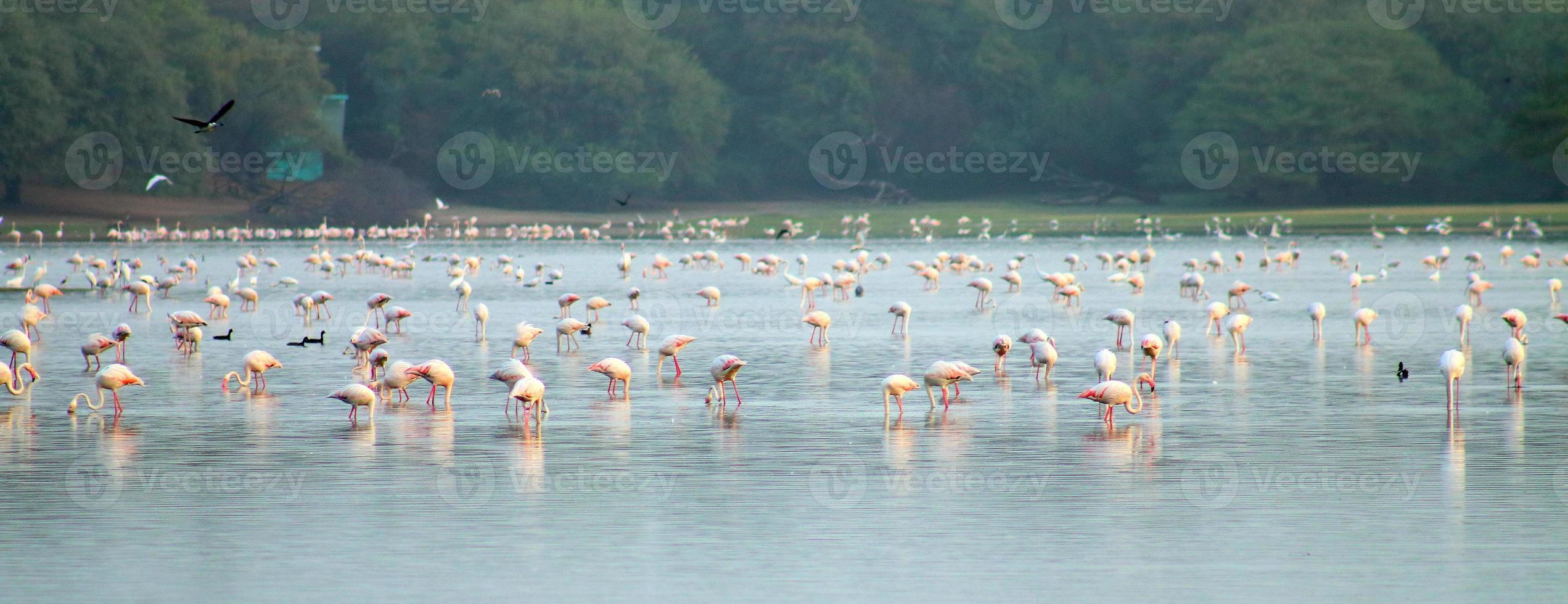 Flamingos!!! photo