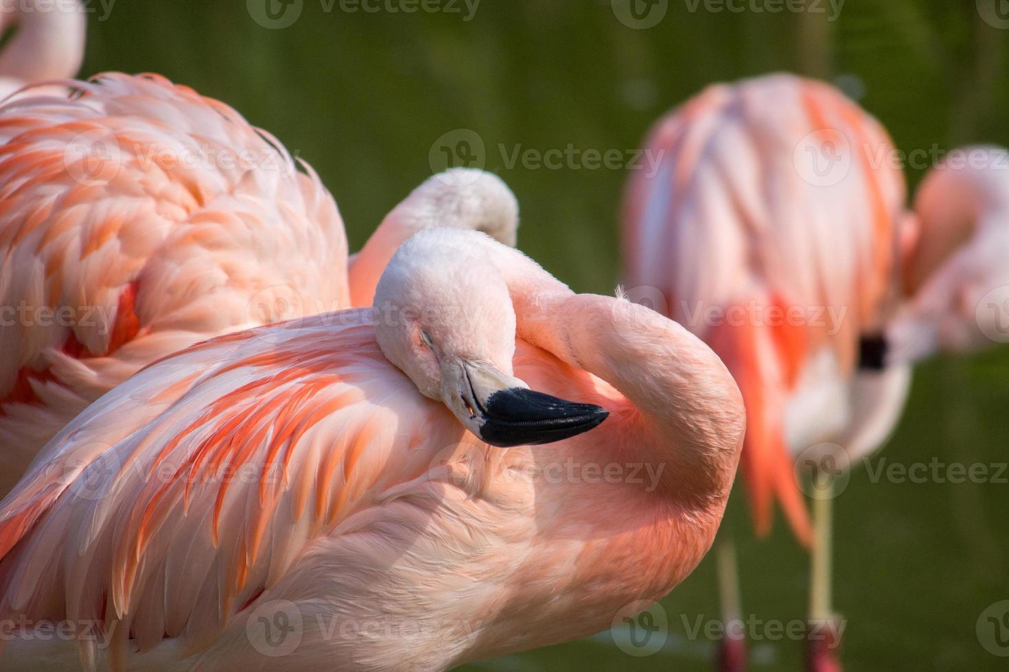 flamencos en un estanque en un entorno natural foto