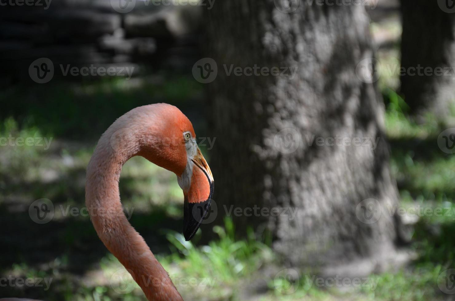 Flamingo 4 photo