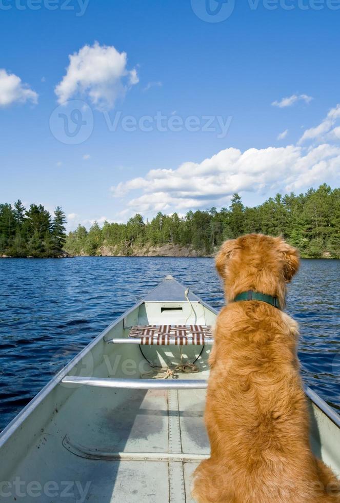perro y su canoa foto
