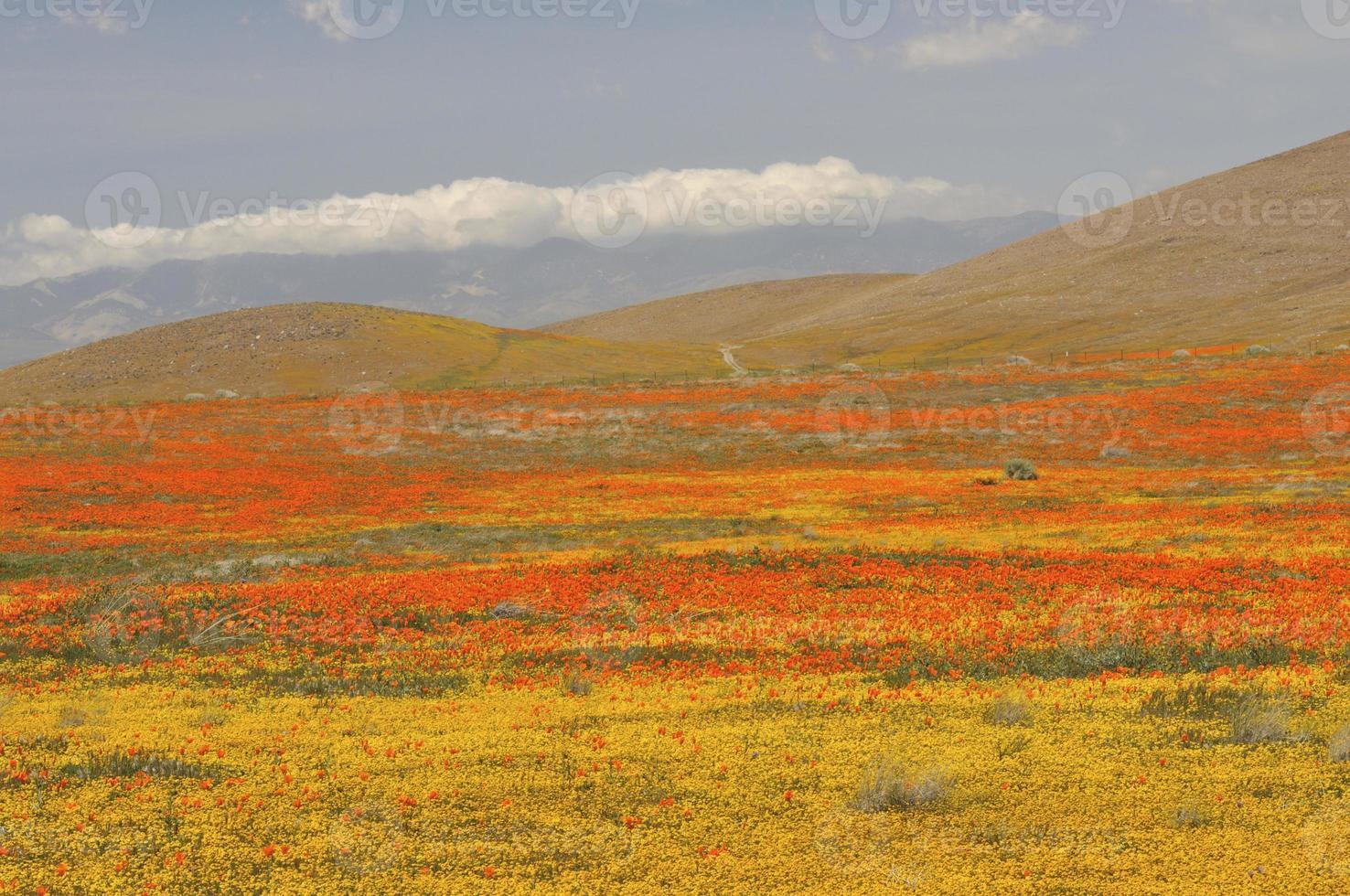 Scenic Antelope Valley in Spring photo