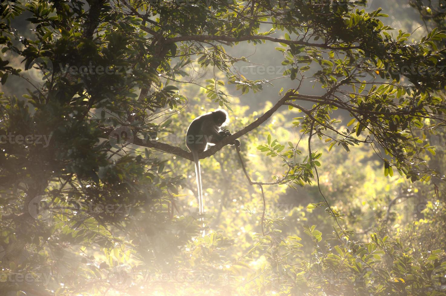 Mono sentado un árbol en el sol en la mañana. foto