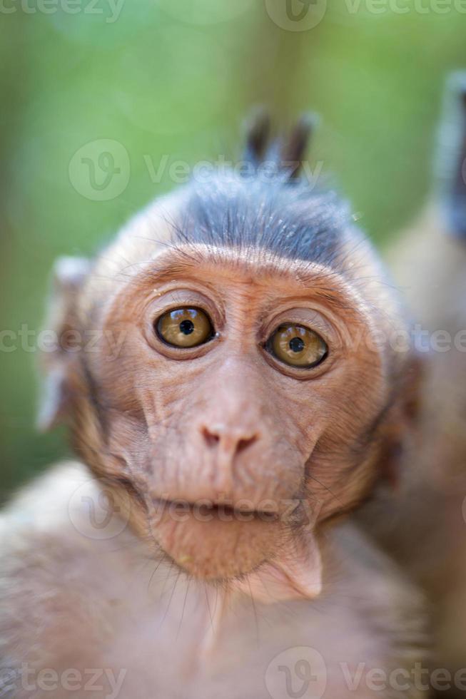 Cute infant Monkey photo