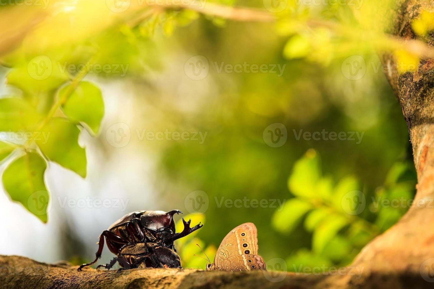 Escarabajo rinoceronte foto