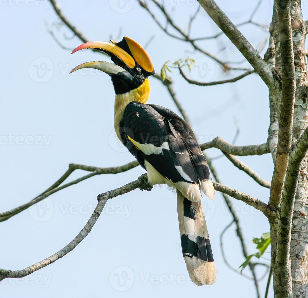 Bird in nature photo