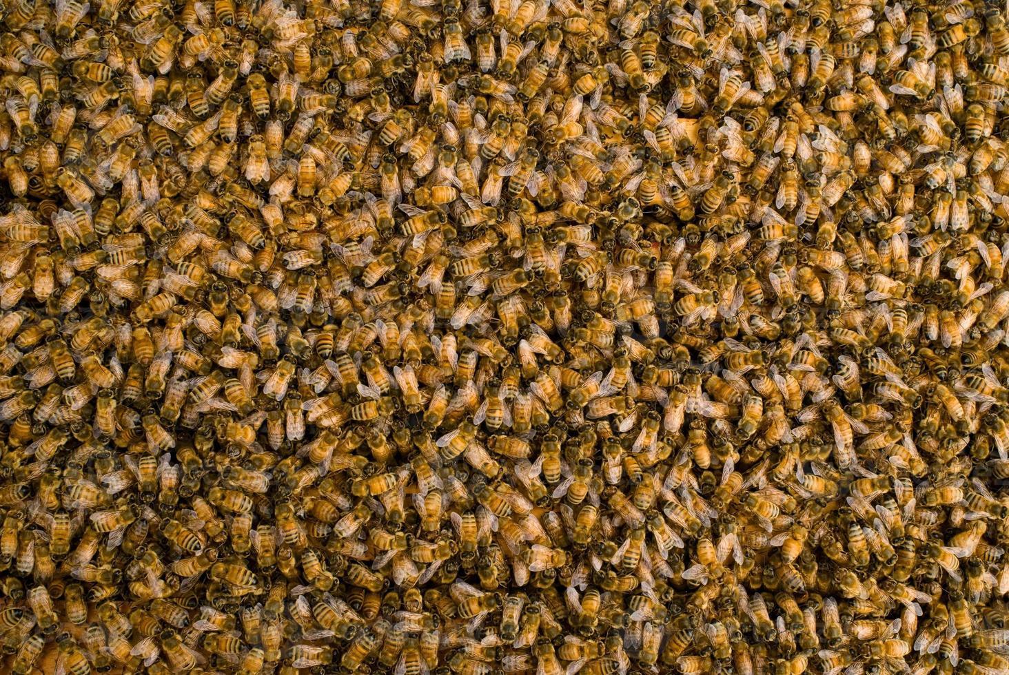 masa de miel de abeja foto