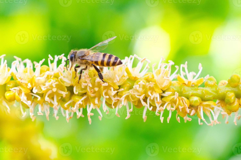 Bee 4 photo