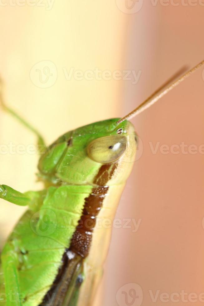 insecto y pequeño insecto foto