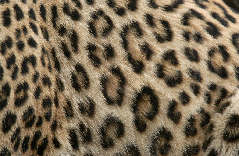 piel de leopardo foto
