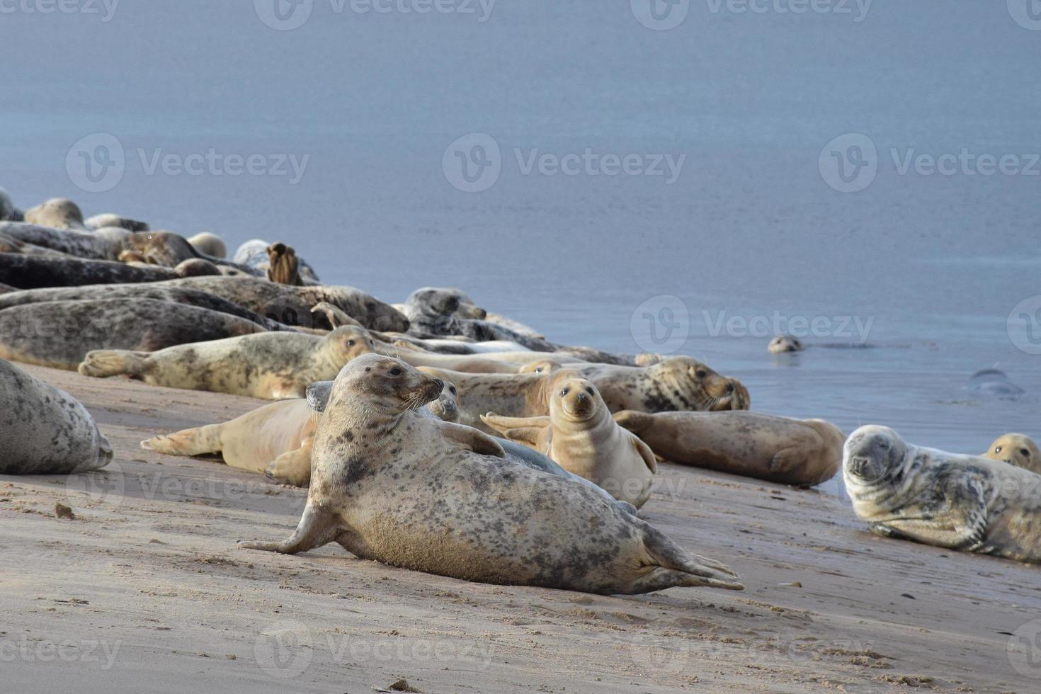 Gray Seal Group photo