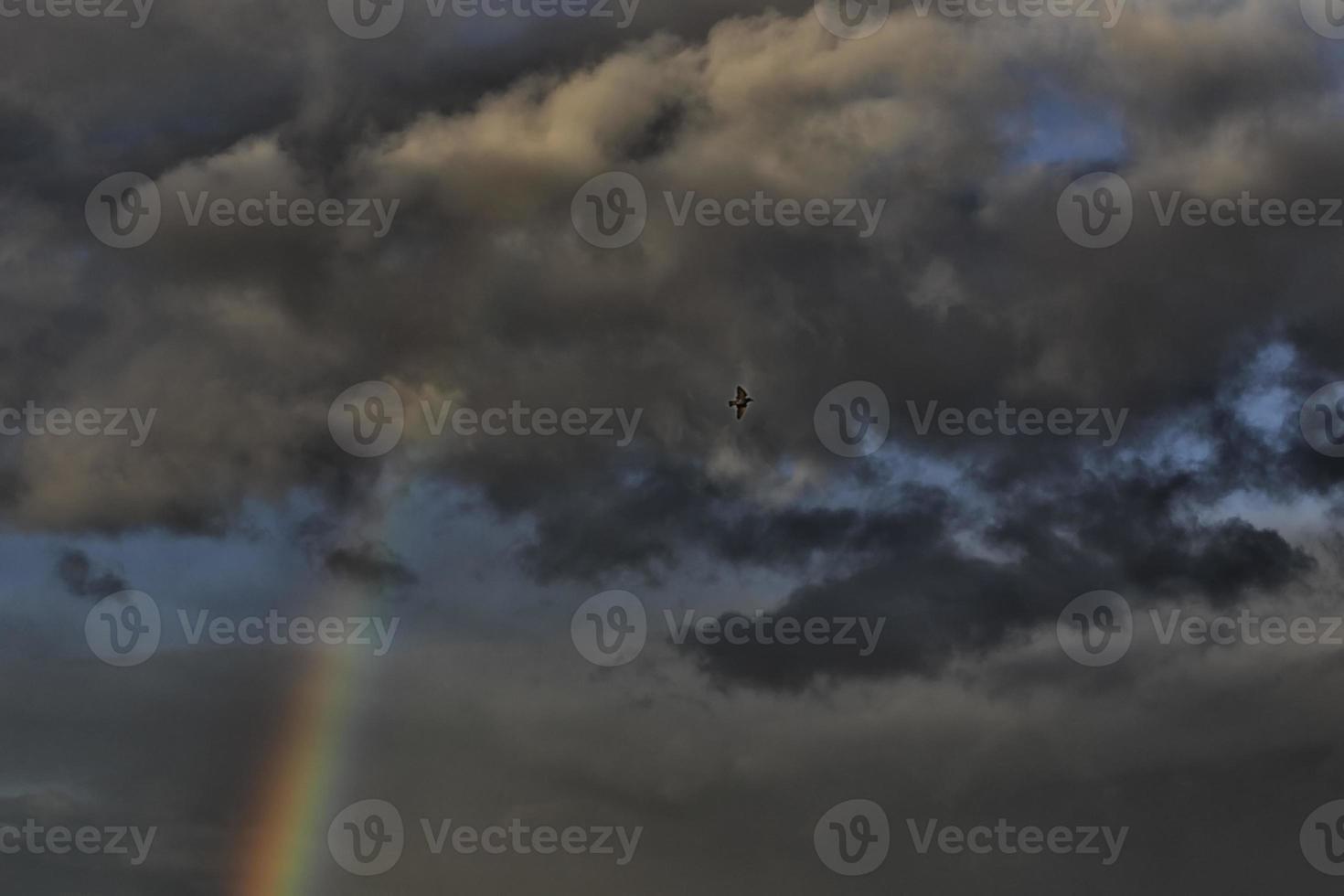 Arc-en-ciel et oiseau photo