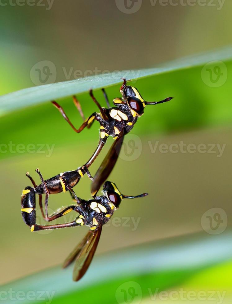 Wasps photo