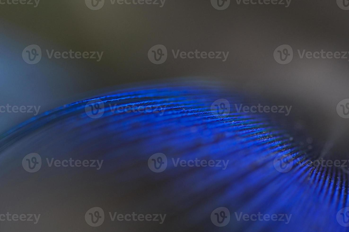 pluma abstracta foto