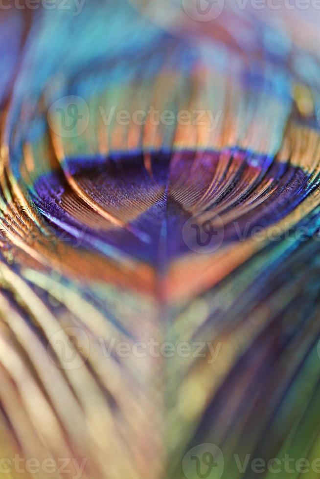 pluma de pavo real abstracta, desenfoque de colores vivos foto