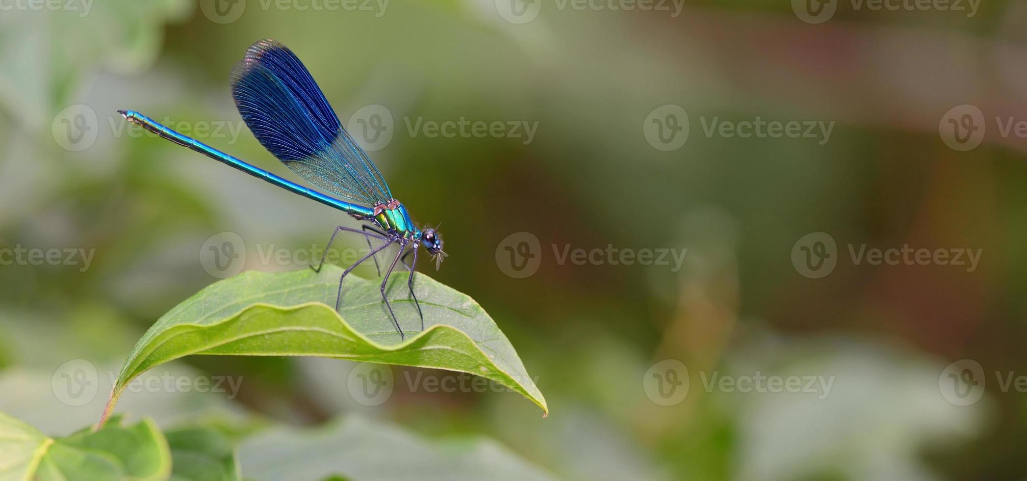 libélula en bosque foto