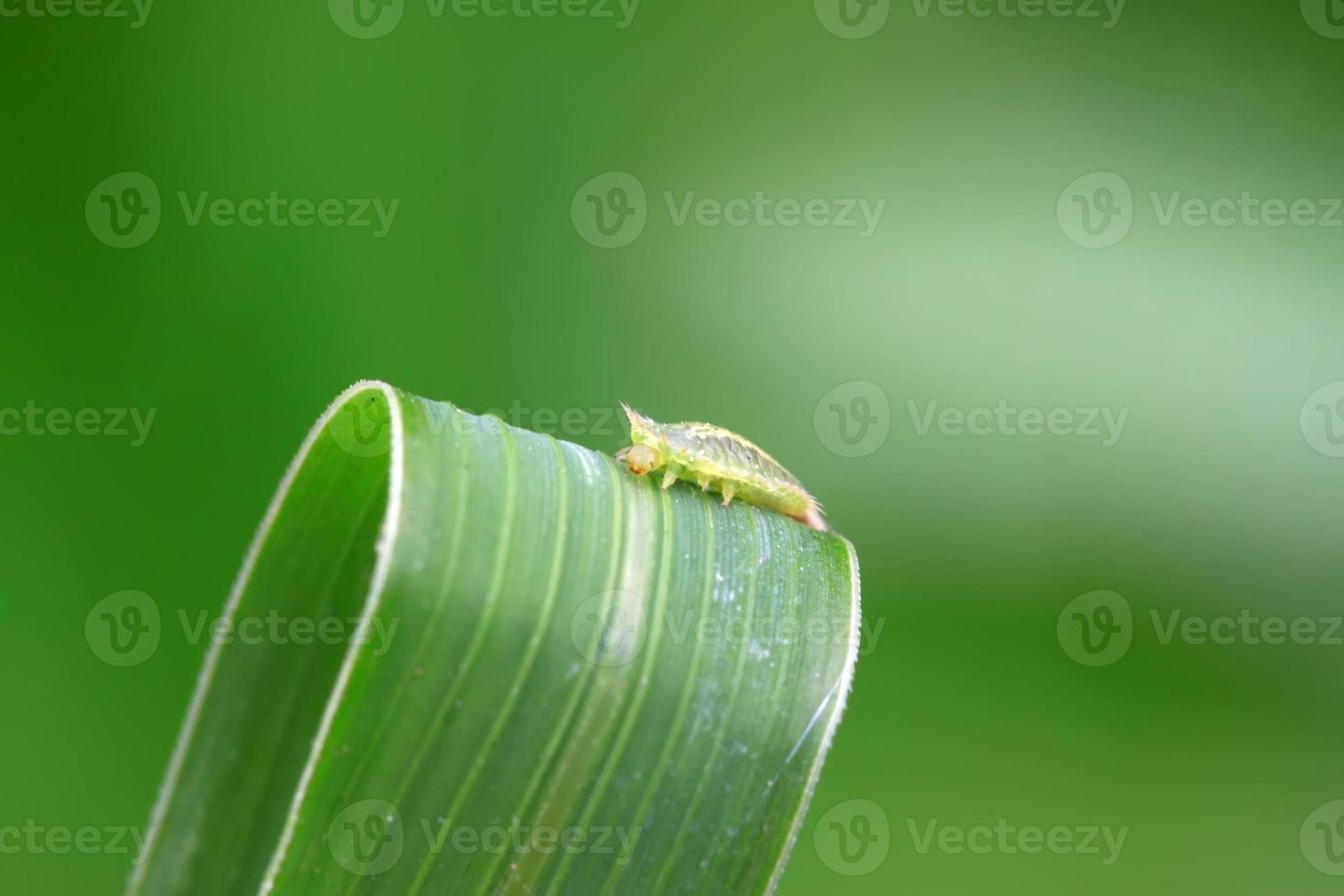 insectos coleópteros foto