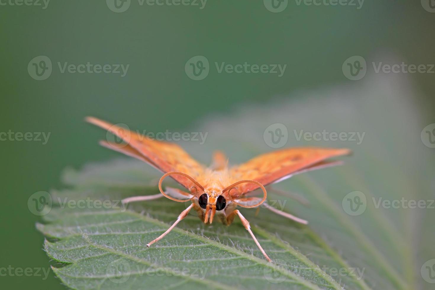 insectos polillas foto