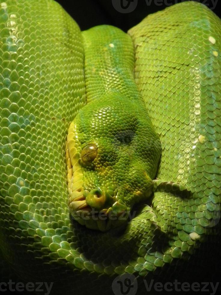 serpiente verde foto
