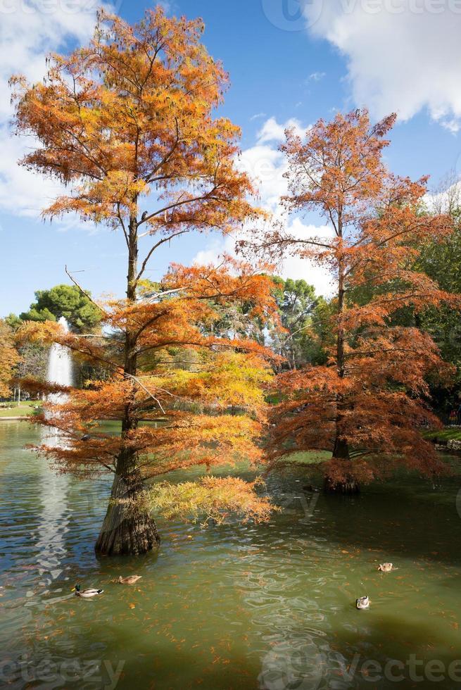 parque del retiro en madrid otoño foto