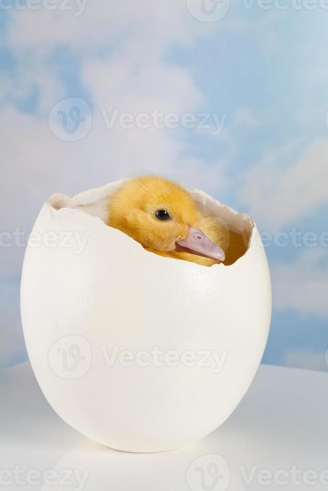 Hiding inside its egg photo