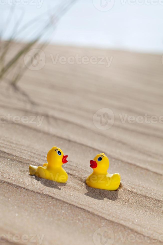 Duckies in the desert photo