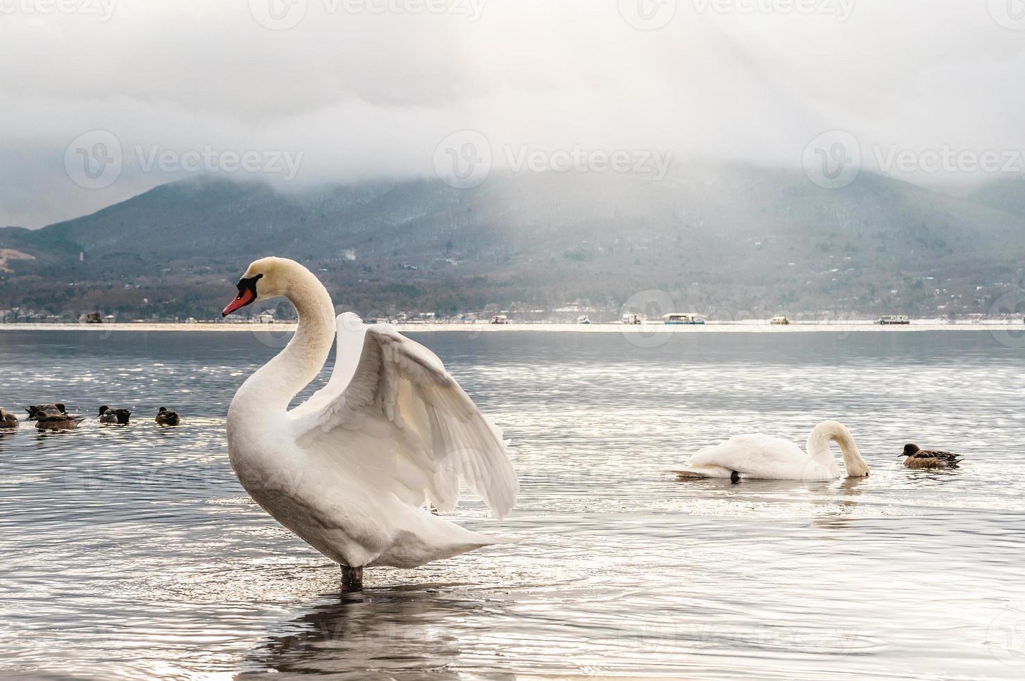 lago de los cisnes foto