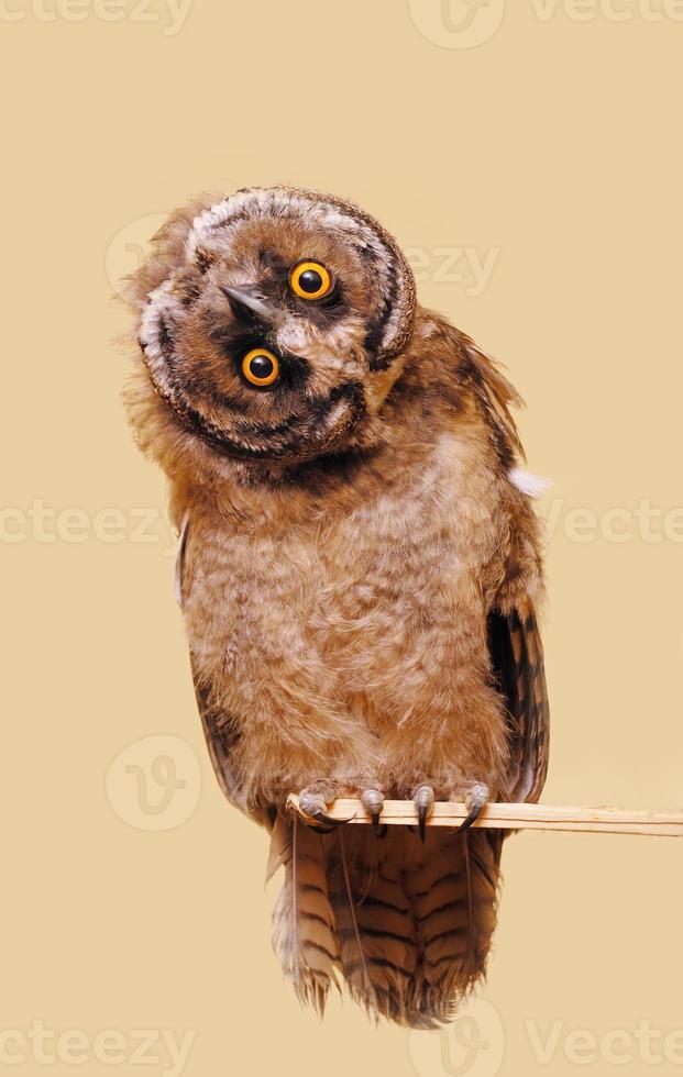 Funny owl photo
