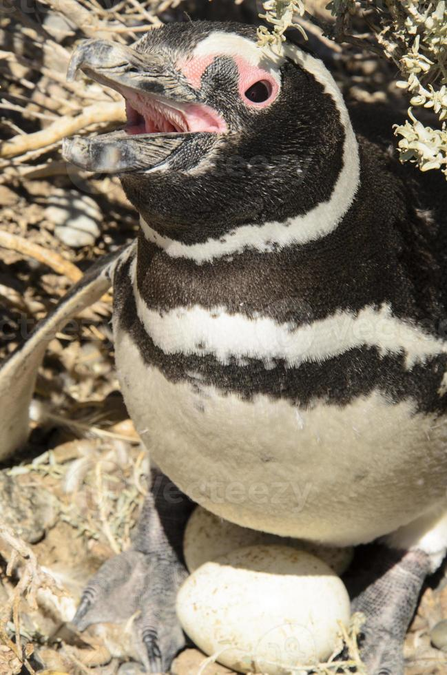 pingüino foto