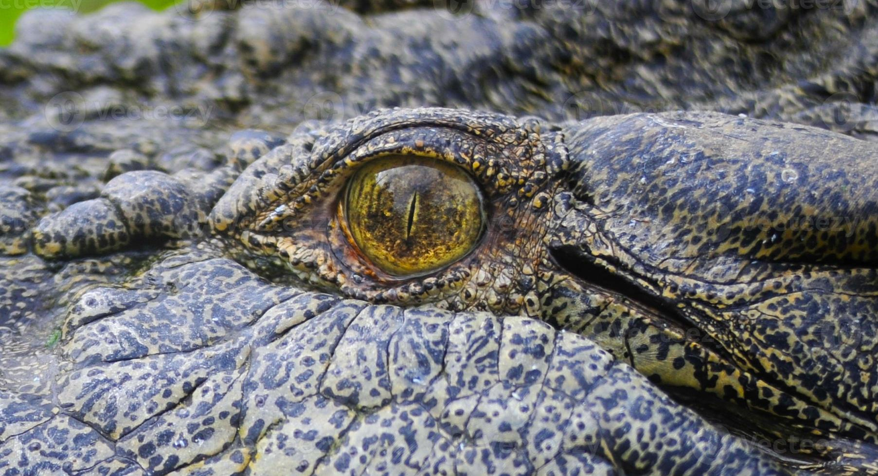 Cerrar ojo de cocodrilo de agua salada foto