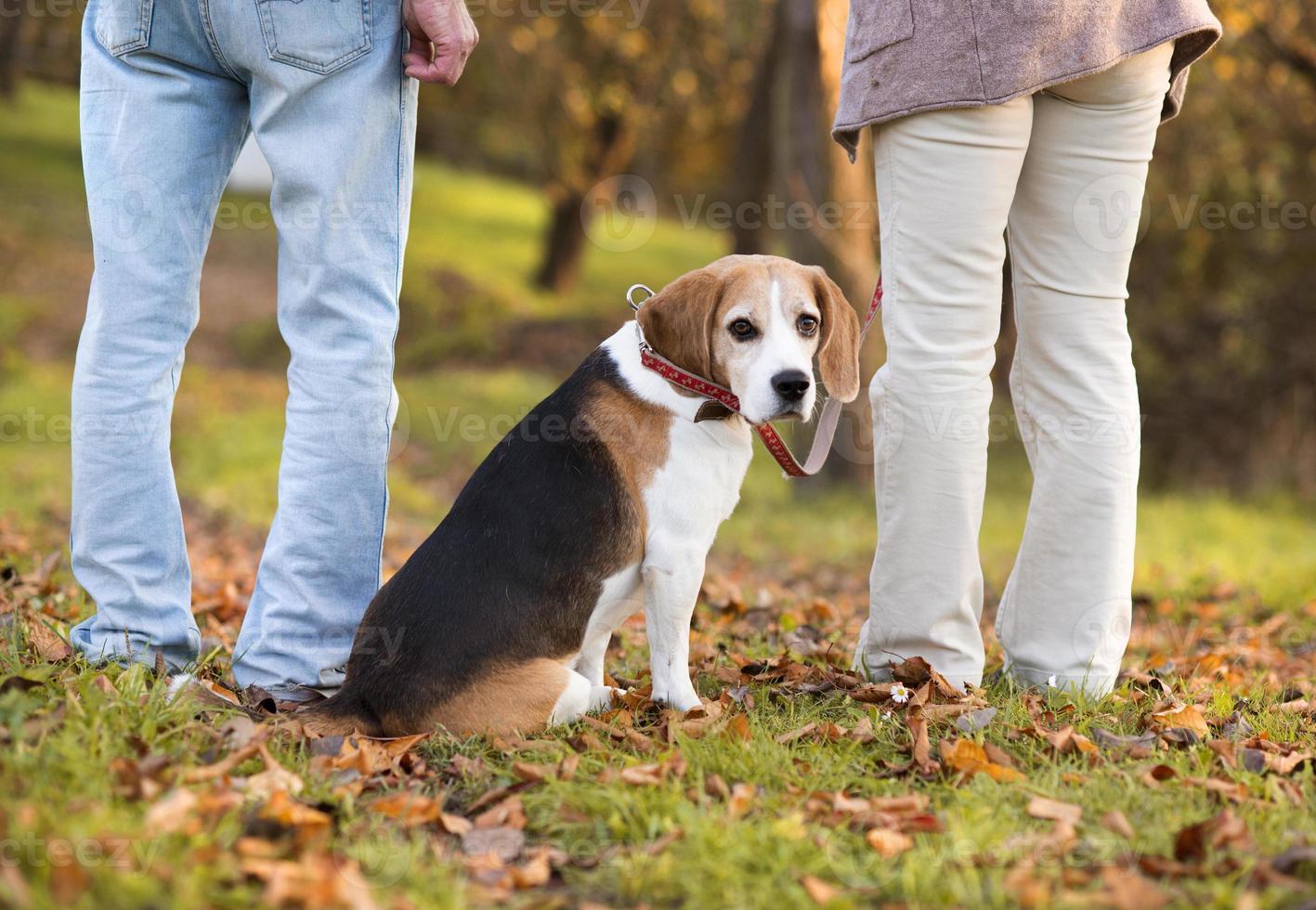 Beagle sentado entre dos personas al aire libre foto