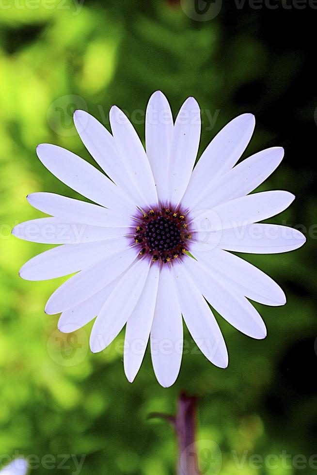 flor foto