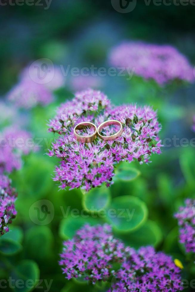 Photo wedding rings on purple