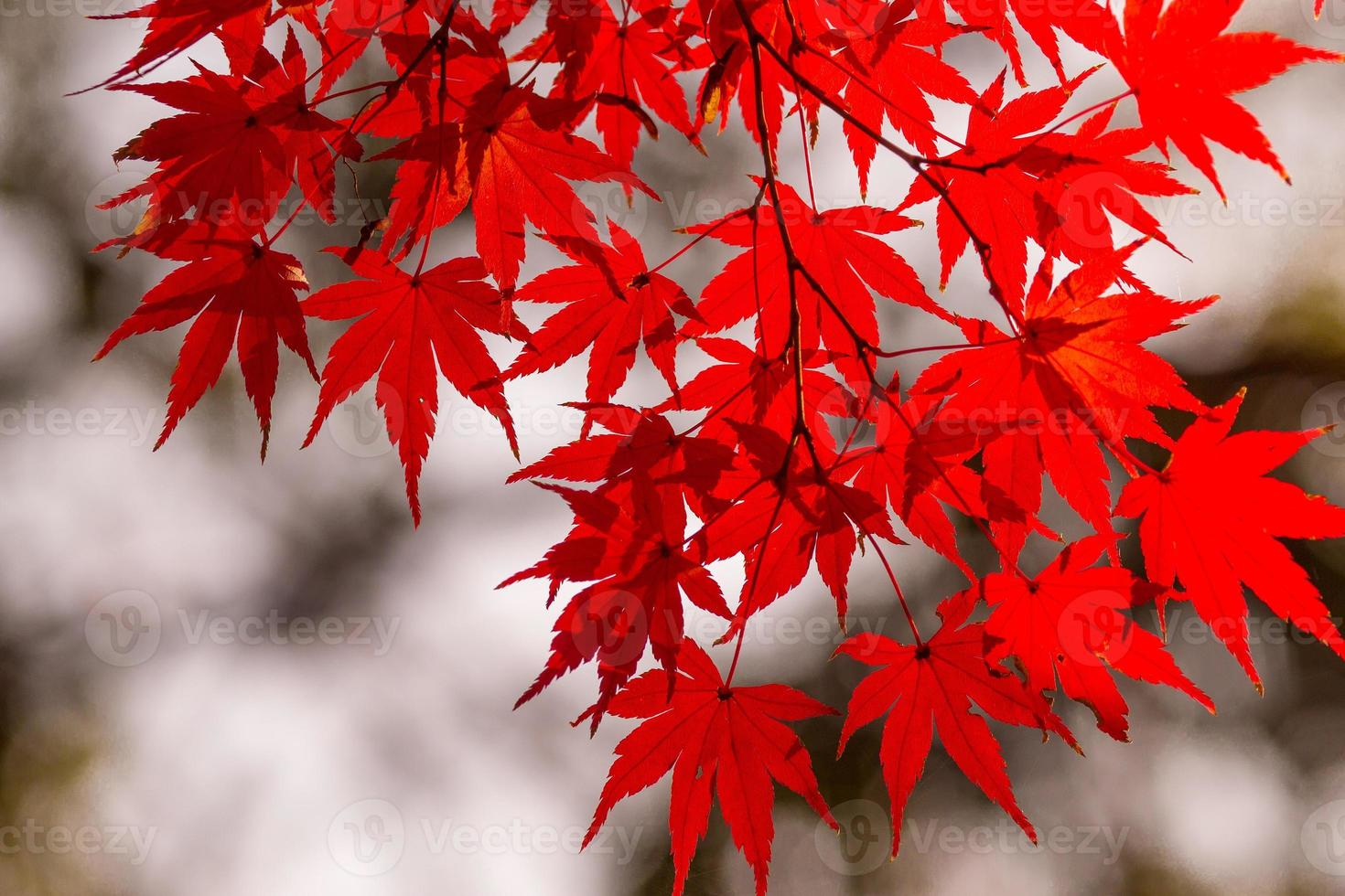 Autumn foliage photo