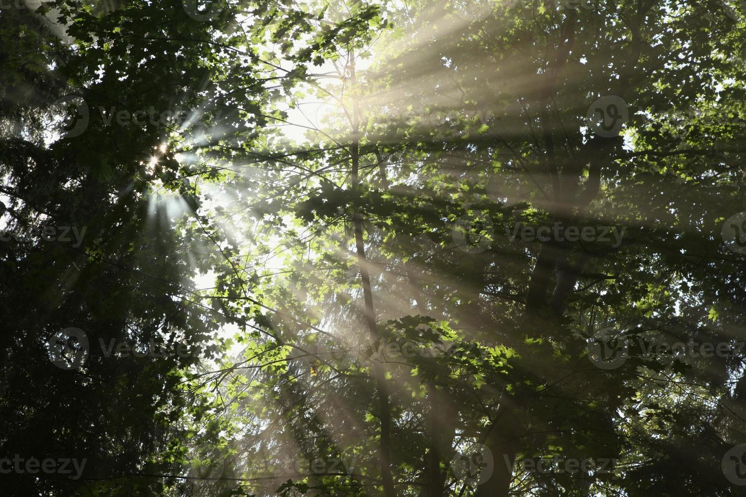 Forest canopy photo