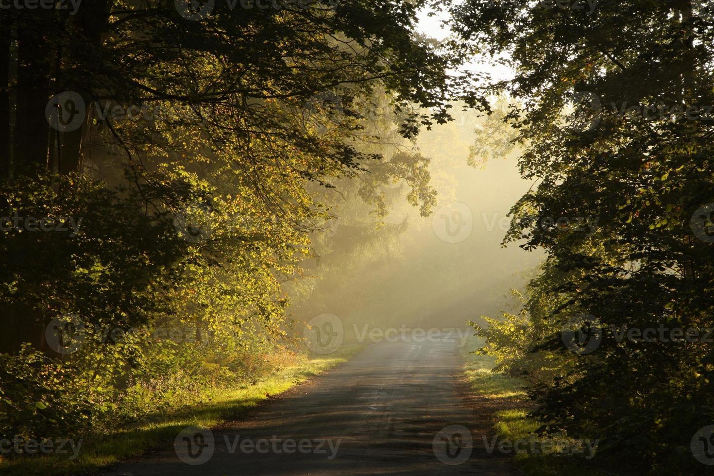 Rural lane at dawn photo