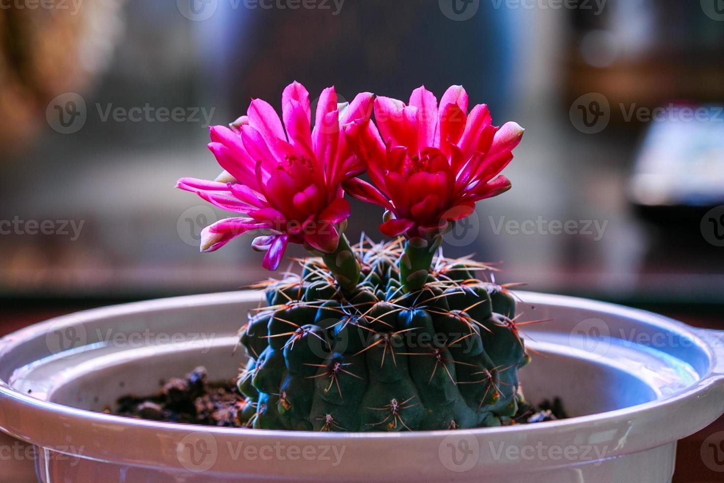flor de cactus foto