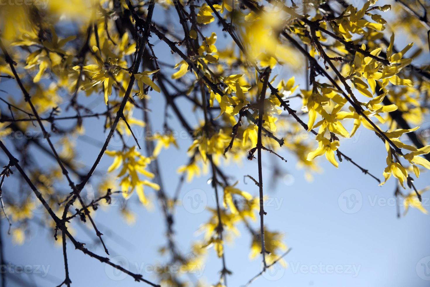 Flores amarillas foto