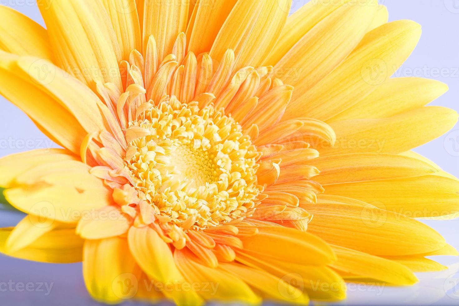 flor amarilla foto