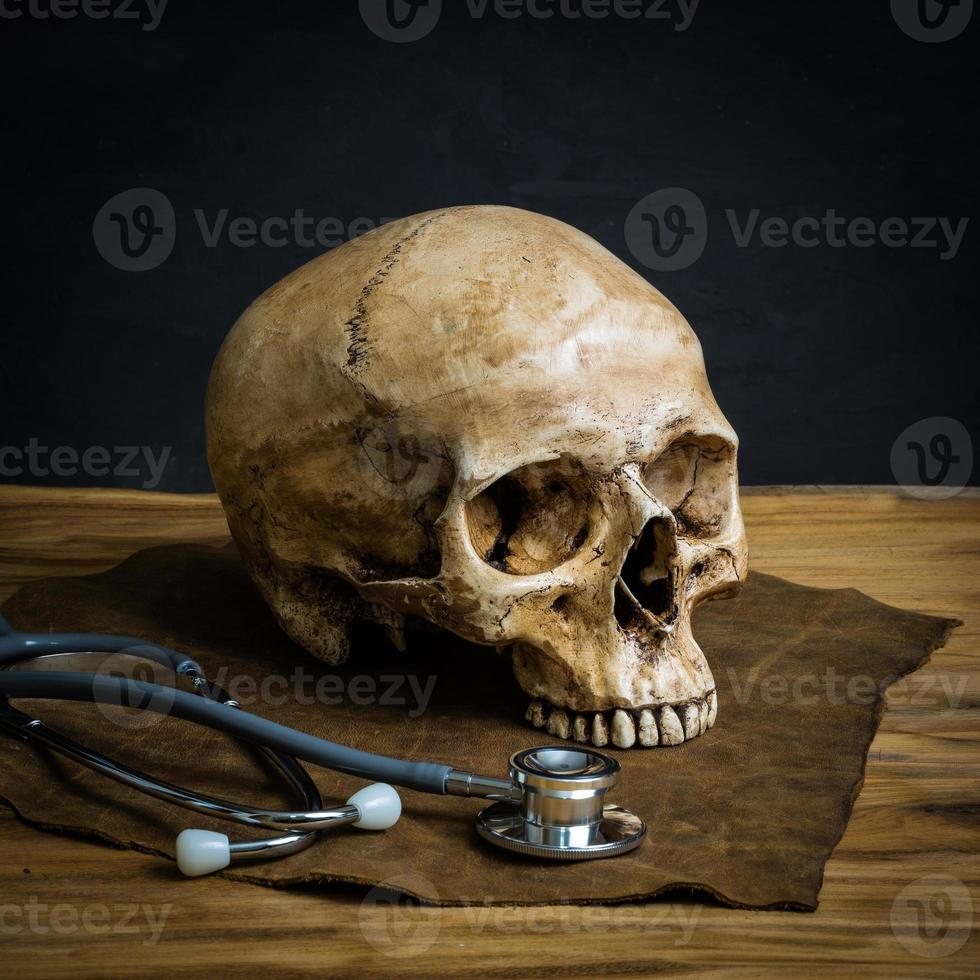 still life skull photo