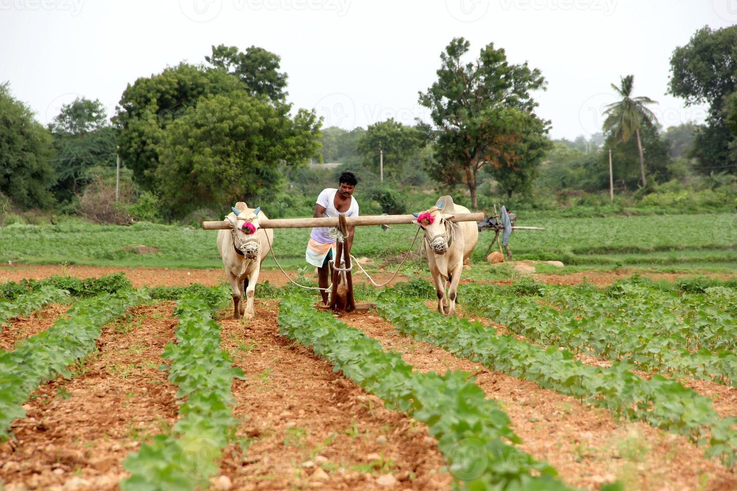 Farmer Plowing photo