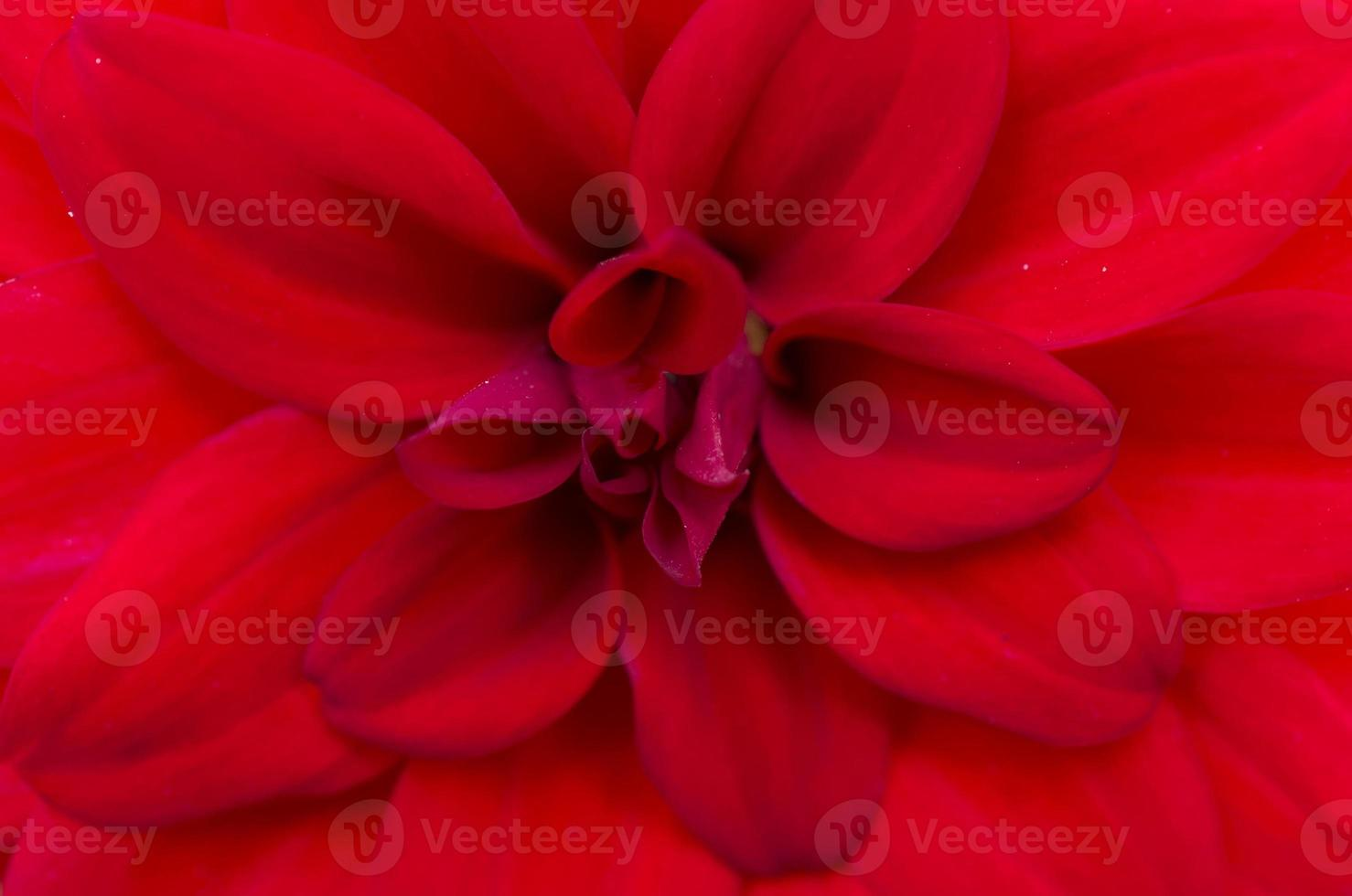 Hypnotic flower photo