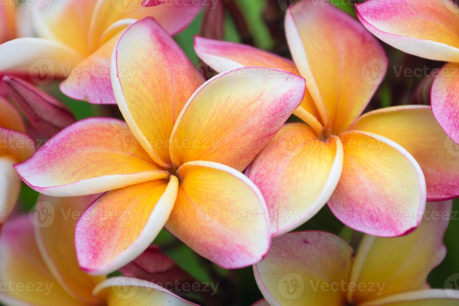 flores tailandesas foto